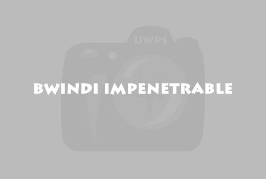 bwindi-impenetrable