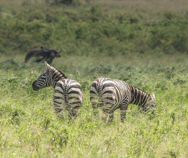 Kidepo Valley National Park (22)