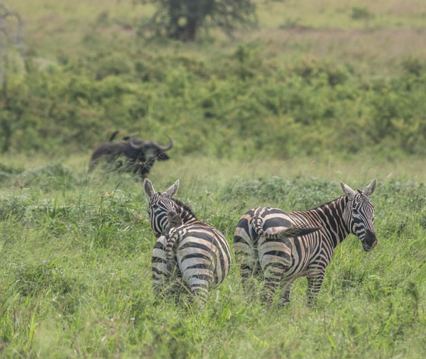 Kidepo Valley National Park (23)
