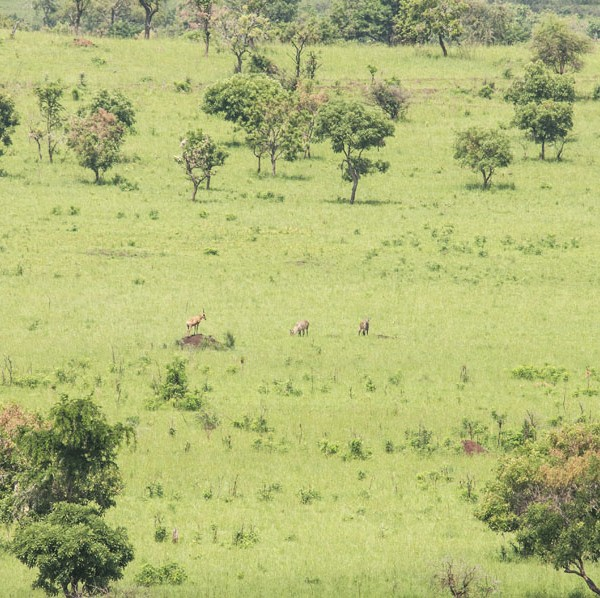 Kidepo Valley National Park (30)