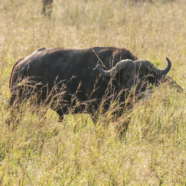 Kidepo Valley National Park (31)