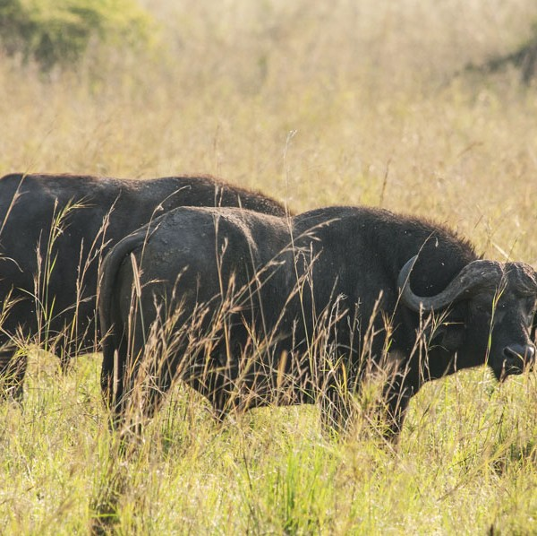 Kidepo Valley National Park (34)