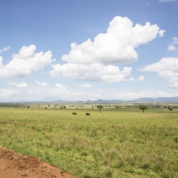Kidepo Valley National Park (5)
