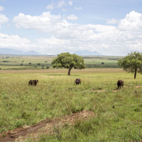 Kidepo Valley National Park (6)
