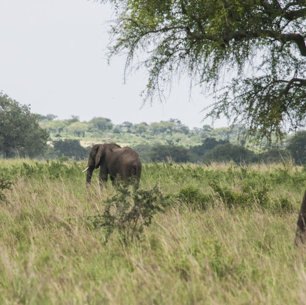Kidepo Valley National Park (7)