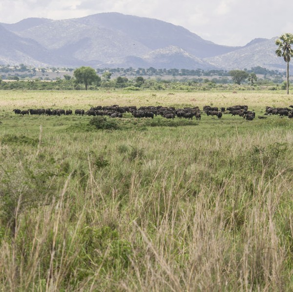 Kidepo Valley National Park (8)