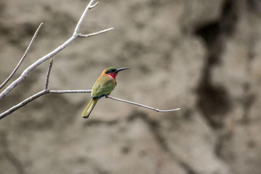 Murchison Falls National Park (101)