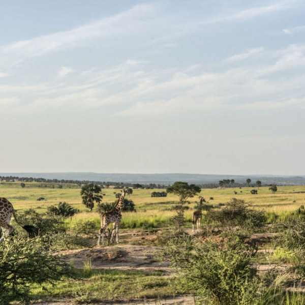 Murchison Falls National Park (107)