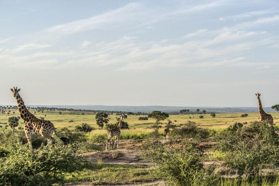 Murchison Falls National Park (107)