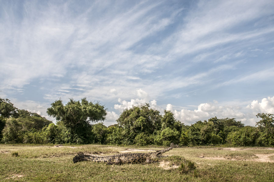 Murchison Falls National Park (20)