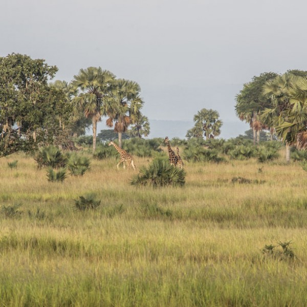 Murchison Falls National Park (24)