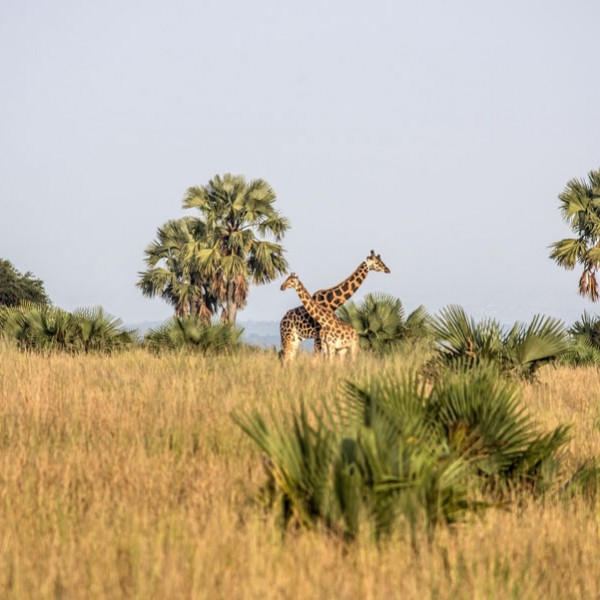 Murchison Falls National Park (25)