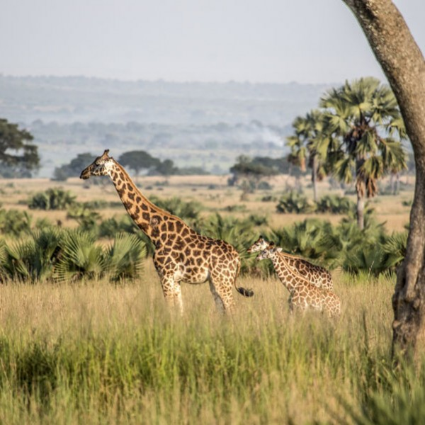 Murchison Falls National Park (26)