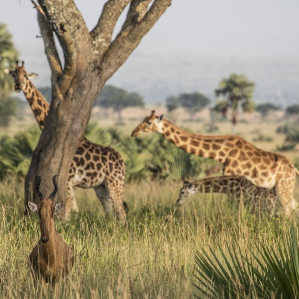 Murchison Falls National Park (29)