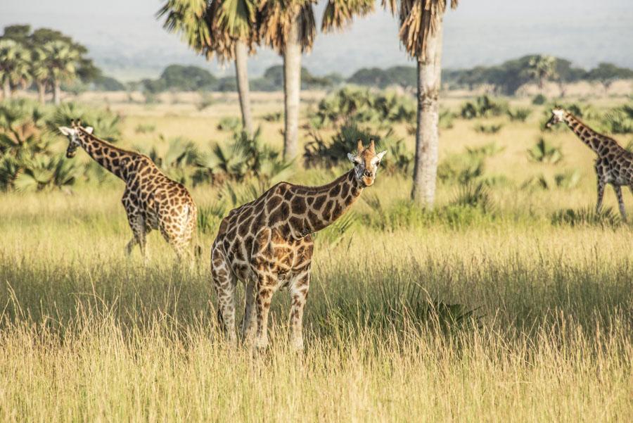 Murchison Falls National Park (32)