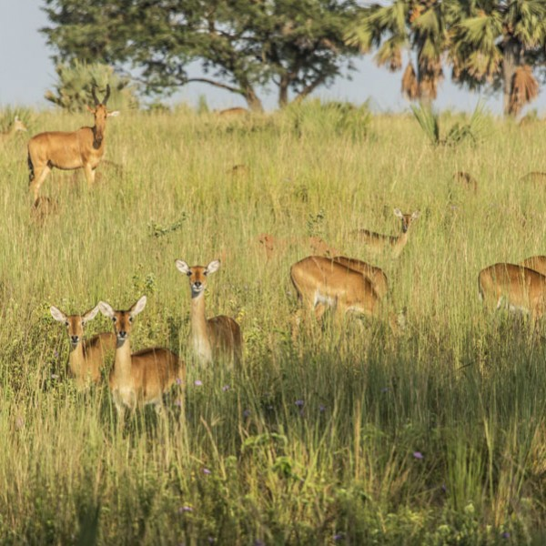 Murchison Falls National Park (33)