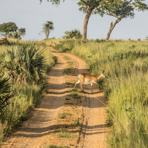 Murchison Falls National Park (35)