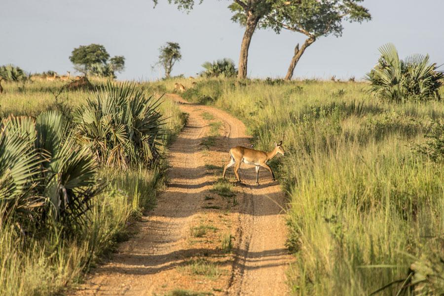 Murchison Falls National Park (35)