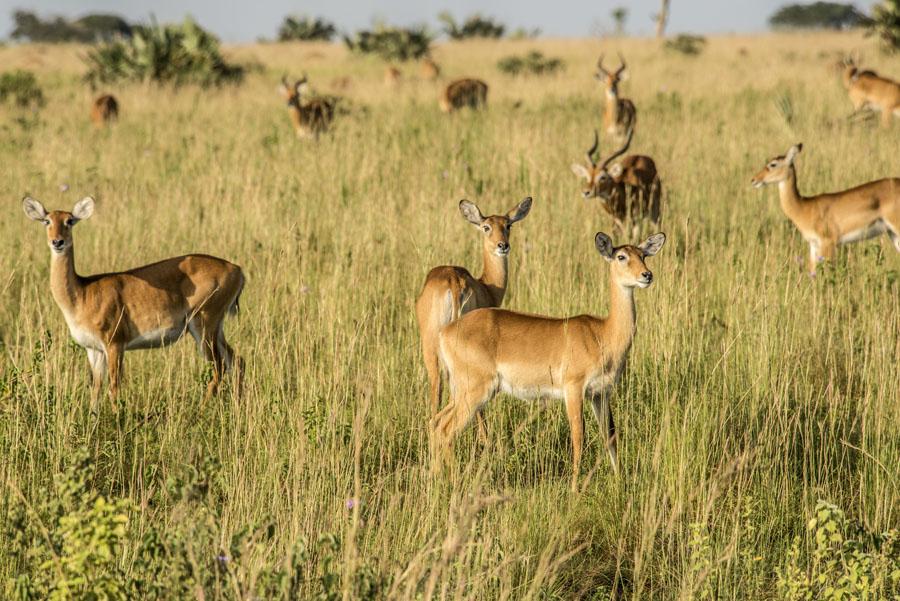 Murchison Falls National Park (37)