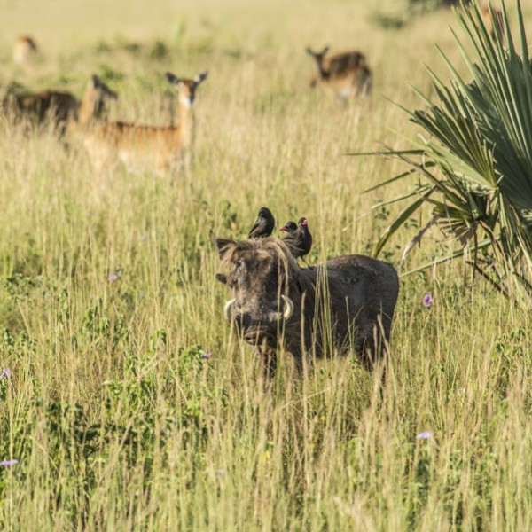 Murchison Falls National Park (39)
