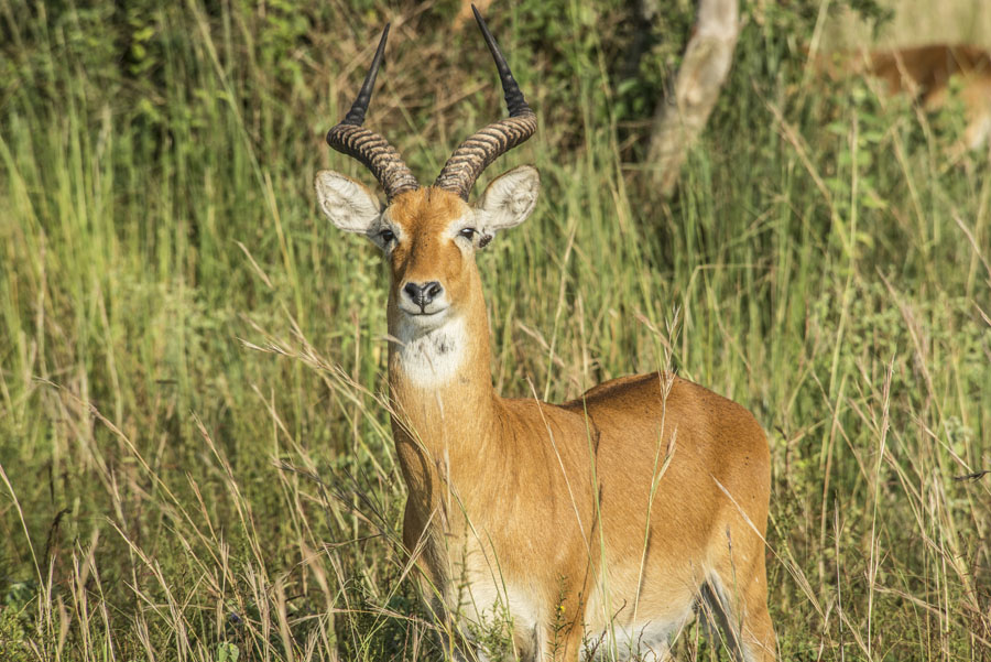 Murchison Falls National Park (40)