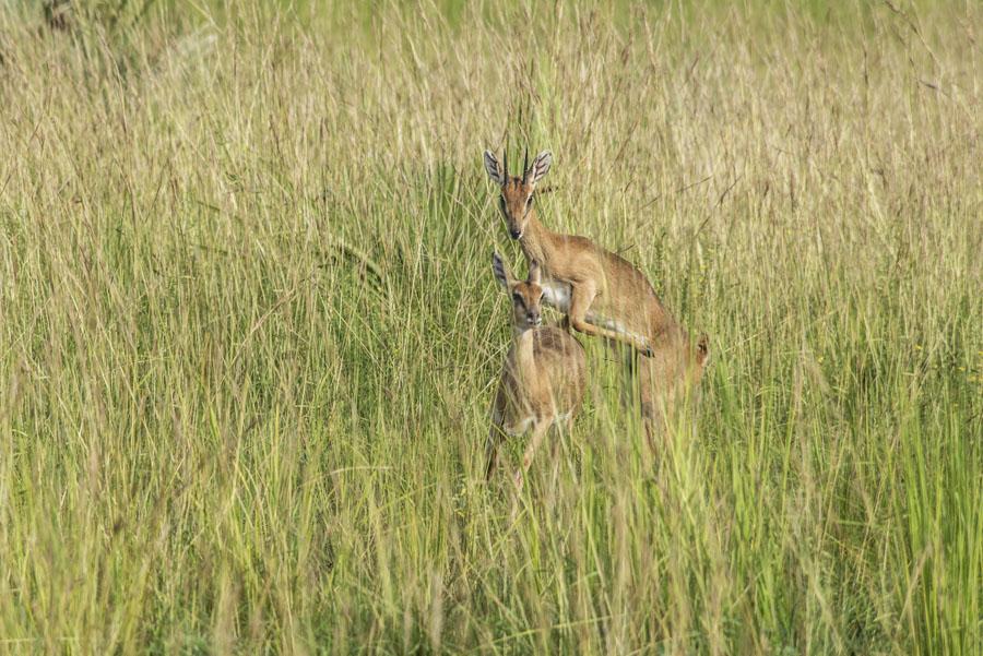 Murchison Falls National Park (42)
