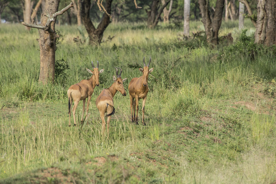 Murchison Falls National Park (43)