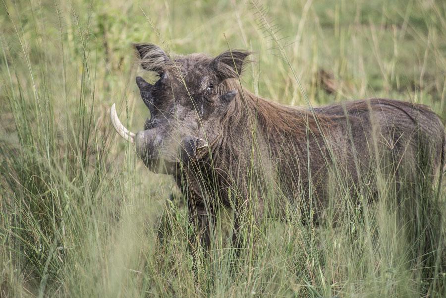 Murchison Falls National Park (44)