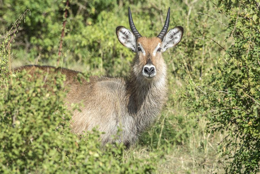 Murchison Falls National Park (47)