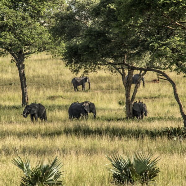 Murchison Falls National Park (50)