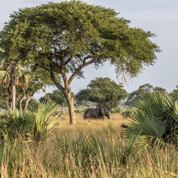 Murchison Falls National Park (55)
