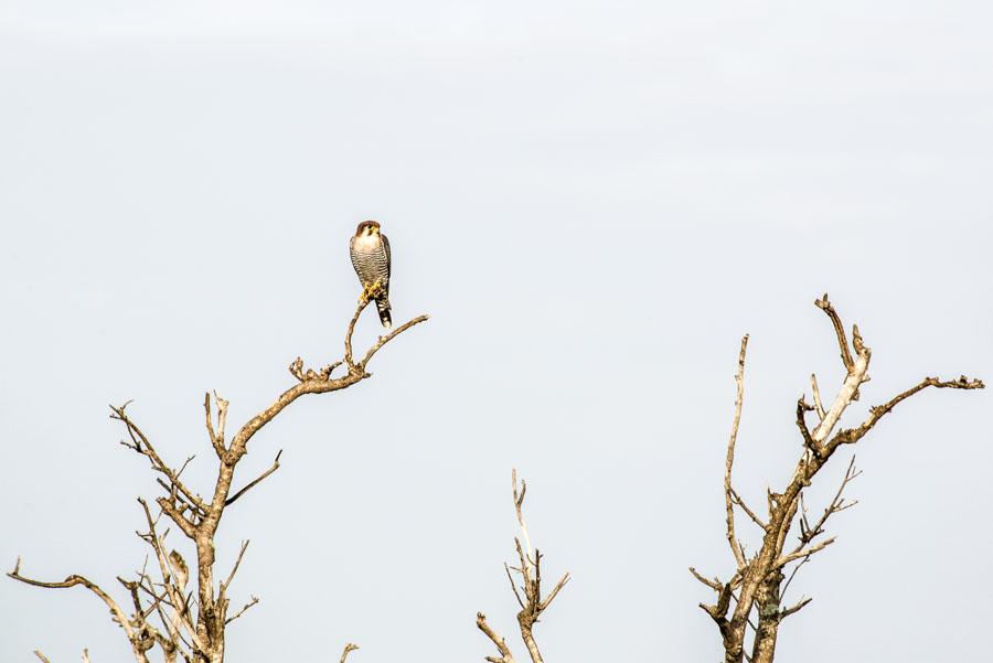 Murchison Falls National Park (56)