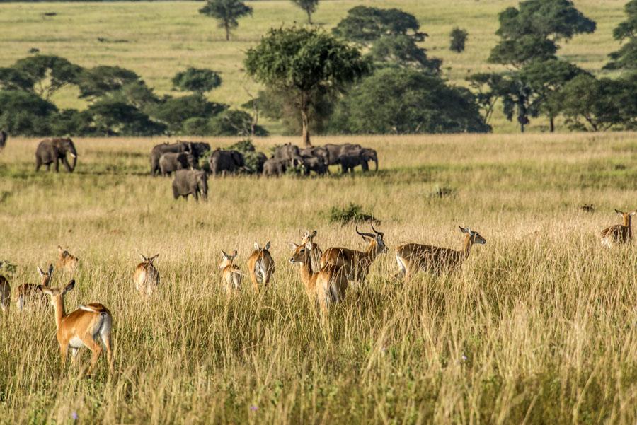 Murchison Falls National Park (57)
