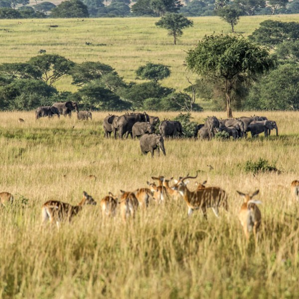 Murchison Falls National Park (58)