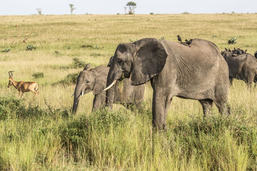 Murchison Falls National Park (61)