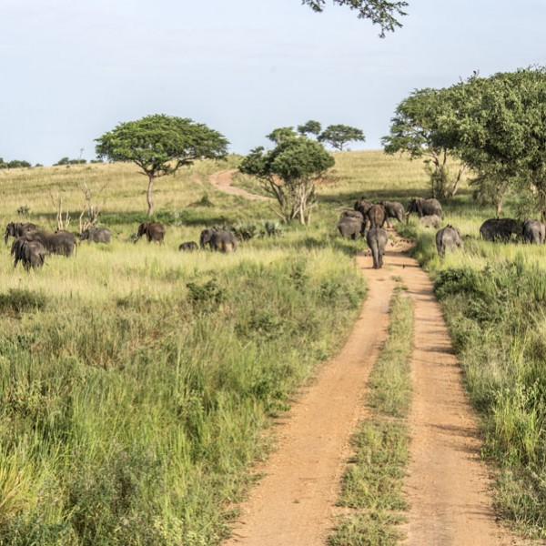 Murchison Falls National Park (63)
