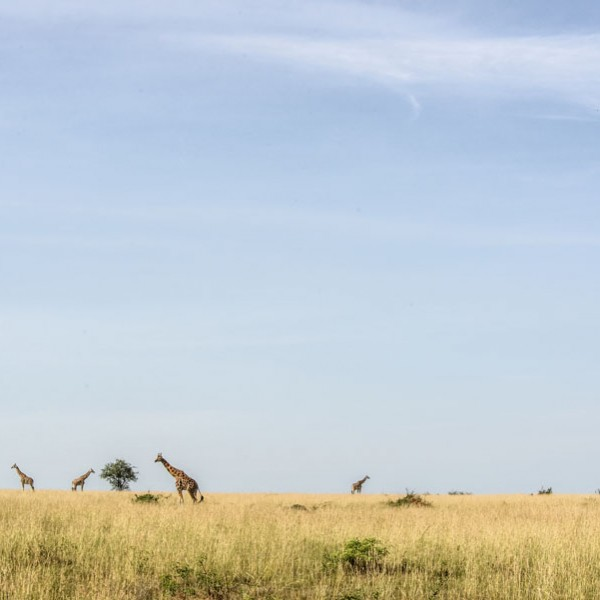 Murchison Falls National Park (68)
