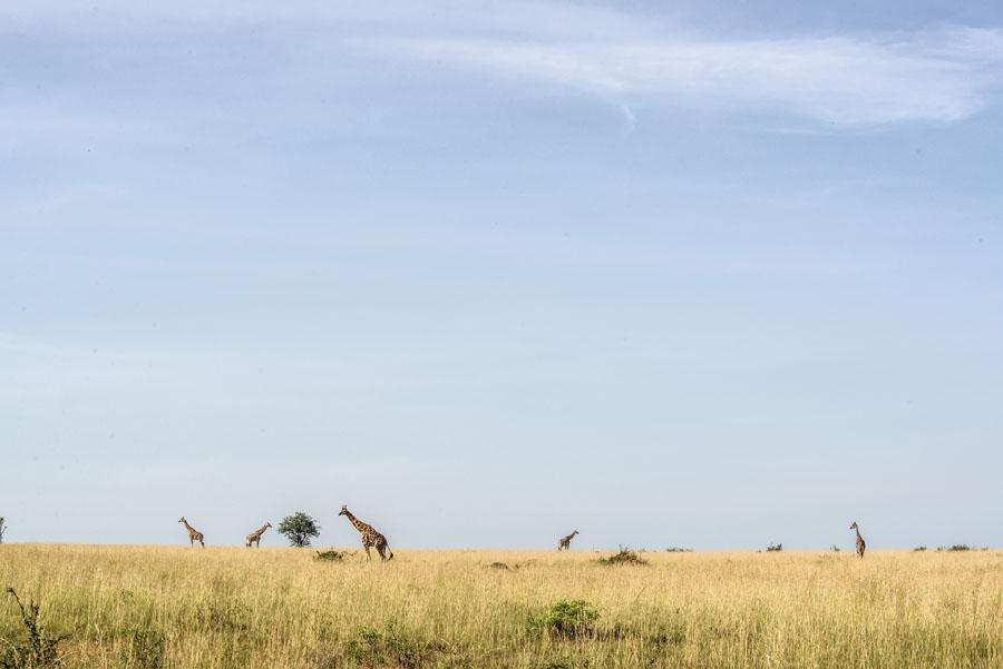 Murchison Falls National Park (68)