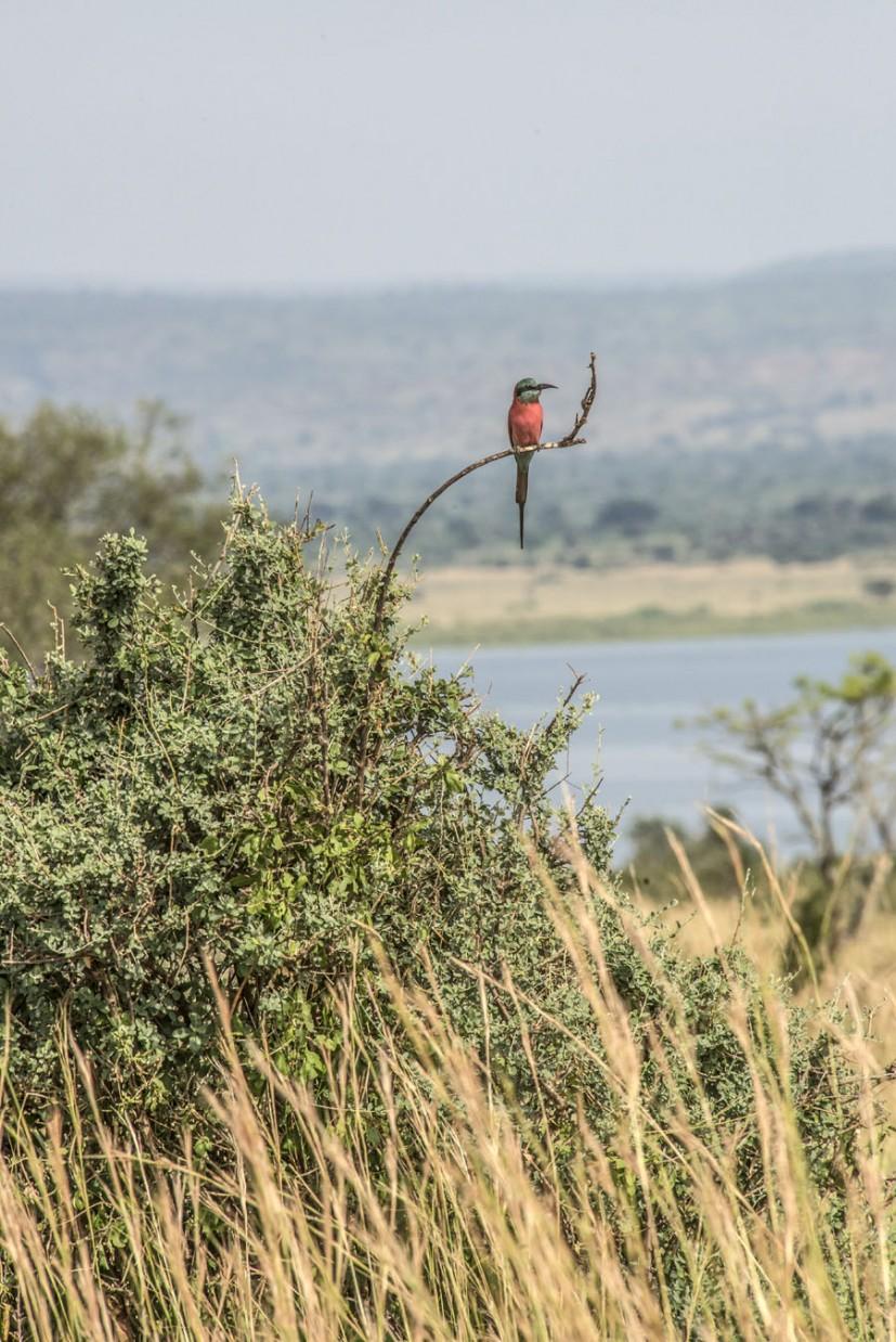 Murchison Falls National Park (70)