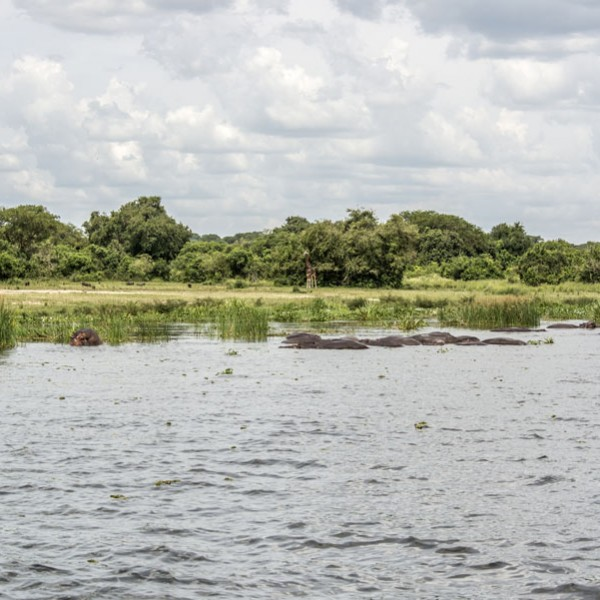 Murchison Falls National Park (91)