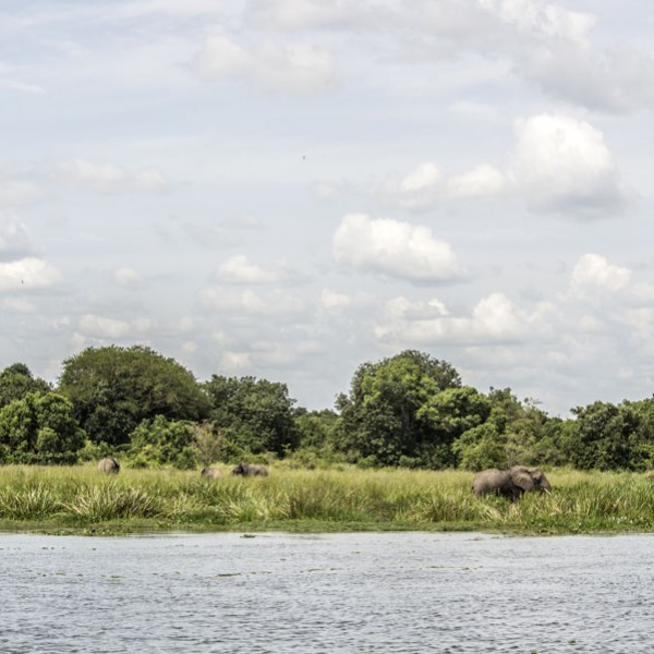 Murchison Falls National Park (94)
