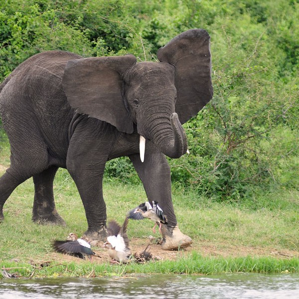 Queen Elizabeth National Park (18)