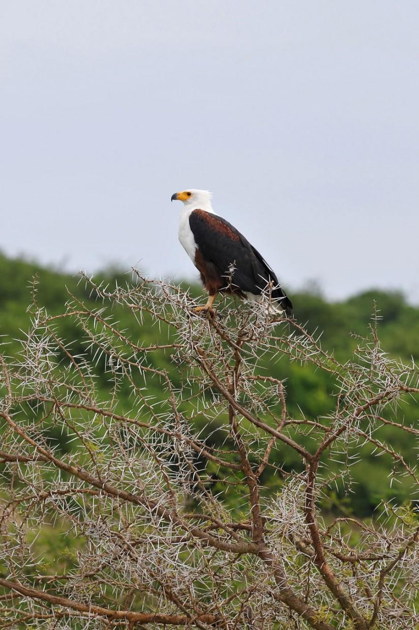 Queen Elizabeth National Park (25)