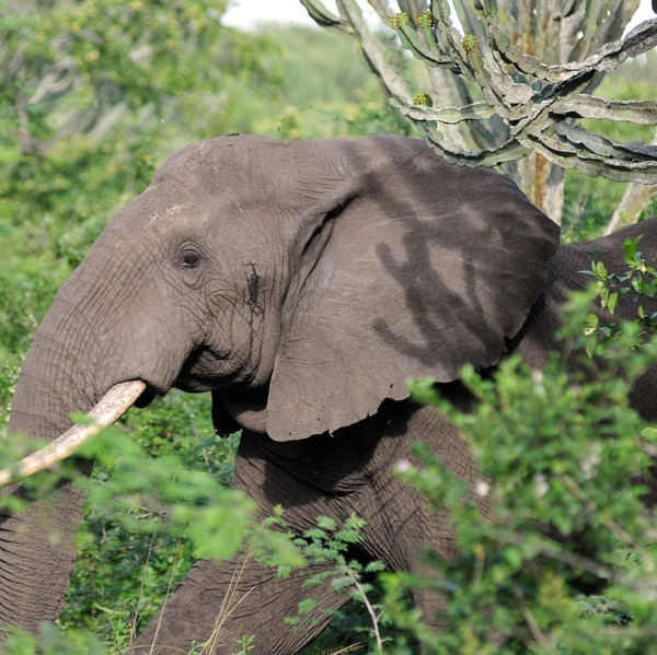 Queen Elizabeth National Park (29)
