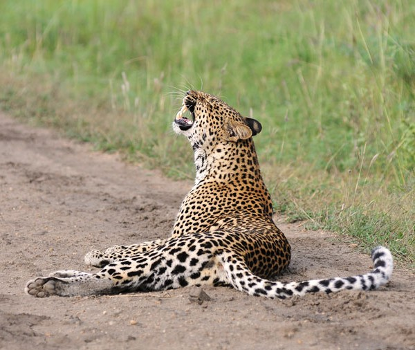 Queen Elizabeth National Park (30)