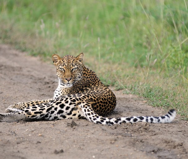 Queen Elizabeth National Park (31)