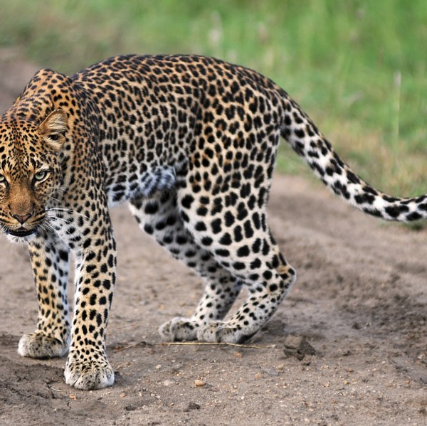 Queen Elizabeth National Park (32)