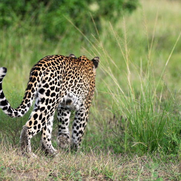 Queen Elizabeth National Park (33)