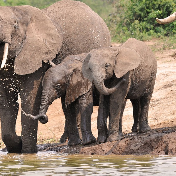 Queen Elizabeth National Park (37)