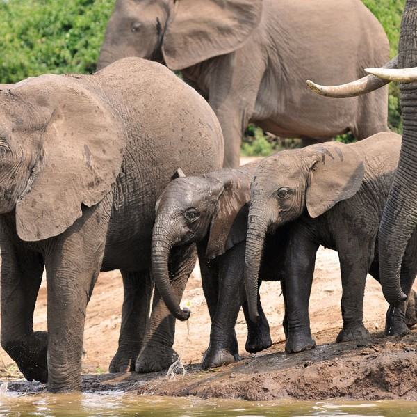Queen Elizabeth National Park (38)
